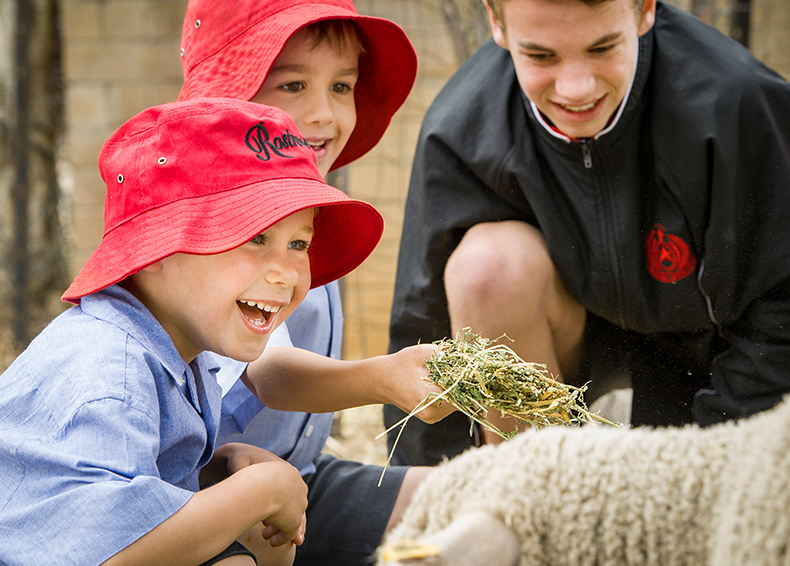 Rostrevor junior students and senior students smiling and laughing while feeding sheep